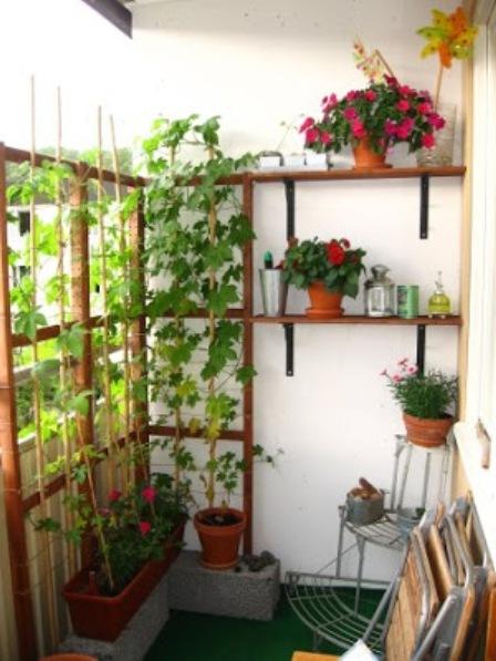 Фото комнатных растений своими руками