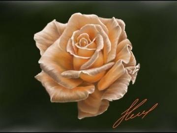 Рисуем цветок (Роза)